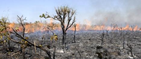 Comitê para a Proteção dos Jornalistas produz manual sobre segurança na cobertura de queimadas