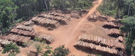 Volume de madeira apreendida pela PF em 2021 já é o maior desde 2018